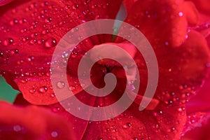 зацветите красный цвет