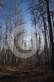 Alaska Highway Canada Remote Trail