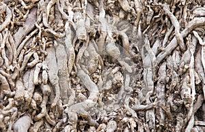 Almond grove water irrigation