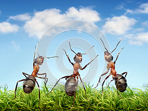 Ants on grass