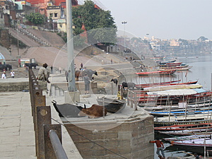 Assi Ghat Varanasi India with boats, cows, and pedestrians