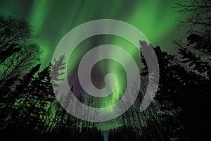 Aurora, night at alaska, fairbanks