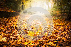 Autumn leaf litter in garden or park, fall outdoor nature background with colorful fallen leaves
