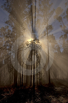 Awakening of day in the forest