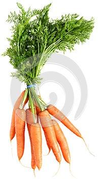 Bündel Karotten mit Hecks