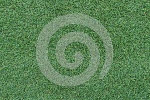 Beautiful green grass background, texture, pattern.