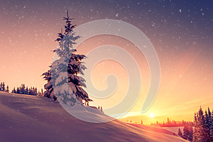 Beautiful winter landscape in mountains. View of snow-covered conifer trees and snowflakes at sunrise. Merry Christmas and happy N