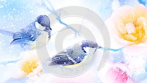 Beautiful yellow and pink roses and tit birds in the snow and frost. Artistic winter natural image. Winter spring season.