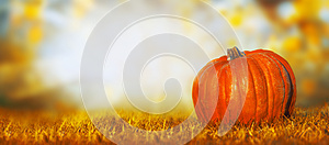 Big pumpkin on lawn over autumn nature background, banner
