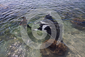 Boy pulls two hundred kilogram BIG Manta Ray.(Lamalera,Indonesia)