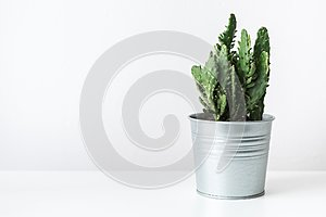 Cactus plant in a metal pot close up. Modern room decoration. Cactus house plant.