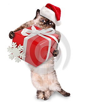 Cat in red Christmas hats with gift, by Sergey Rasulov, Agency: Dreamstime.com
