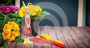 Concept Spring planting on the balcony, in the house, harmony and beauty. Flowers Primula red and yellow and garden tools,