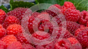 Delicious and fresh red raspberries