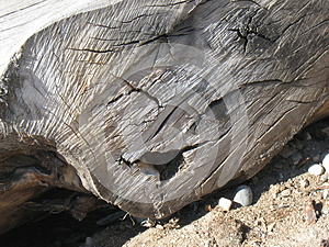 Face in a log on the Boise Greenbelt