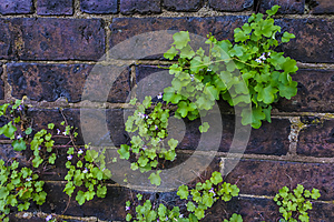 Flower plants are growing between the brick wall