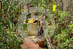 garden tools. yellow garden watering can. beautiful botanical garden. beautiful green plants. greenery around.