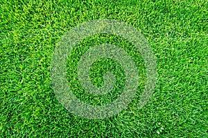 Green grass field background, texture, pattern