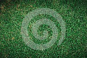 Green grass top view field texture pattern