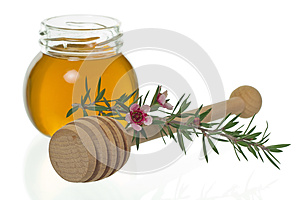 Honey with dipper and manuka flower (Leptospermum)
