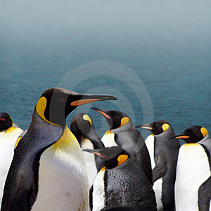 The King of the Penguins - Stock Photos Antarctica Tourists Locations
