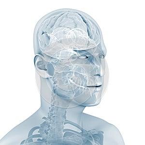 Männliches Gehirn