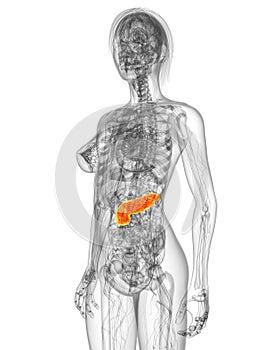 Markiertes Pankreas