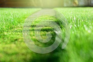 mowing the lawn. A perspective of green grass cut strip. Selecti