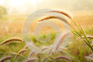 Nature grass flower
