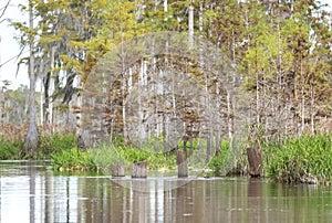 Old logging railroad pylons in Mixon`s Hammock; Okefenokee Swamp National Wildlife Refuge Georgia USA
