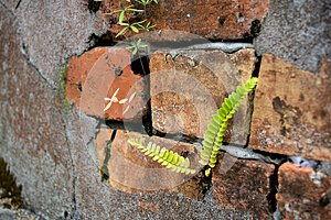 Brick and cement wall with lichen and fern plants as a backgroun