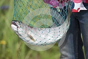 Rainbow Trout (Oncorhynchus mykiss) Reflections Lake Palmer Alaska