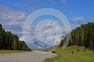 Remote Road Alaska Highway Canada