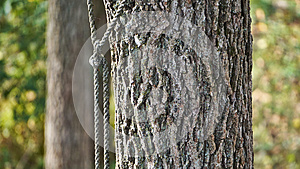 Roped Tree