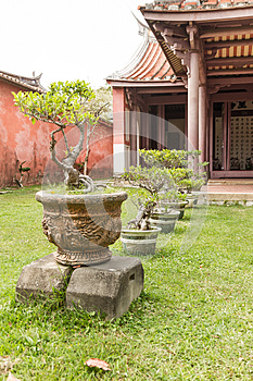 Row of bonsai trees  outside temple
