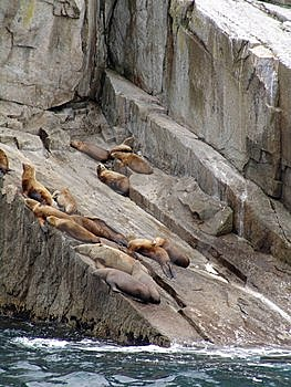 Sea lions on rock