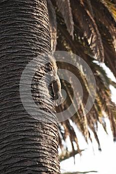 Black-Capped Chickadee Small bird in tree
