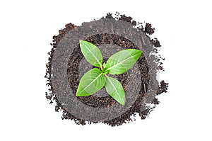 Small green seedling growing from heap of soil