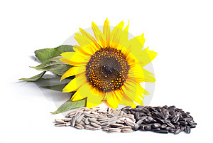 Sonnenblumensamen