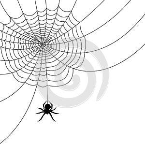 Spider Web/ai File Stock Photos