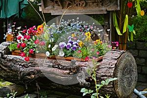Spring flowers in log flume decor