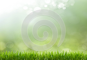 Spring or summer season abstract nature background