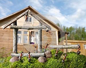 Team of ants constructing house, teamwork