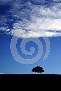 Tree hermit