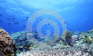 Uepi Shallow Reef - Stock Photos South Pacific Sightseeing Sites