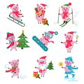 Vector set of flat Christmas pig in different situations - riding on a sled, carry gift box, riding a snowboard, skiers, skating.