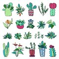 Houseplants and cactuses in flowerpots. Vector hand drawn outline color sketch illustration