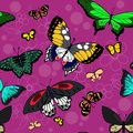 Butterfly seamless pattern. Flying insects background, cute butterflies silhouette i