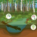 Swamp biotope with pond Royalty Free Stock Photo