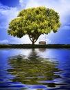Árbol con el oscilación Fotografía de archivo libre de regalías